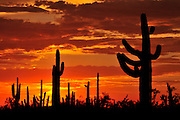 Ironwood Forest National Monument at sunset in the Sonoran Desert near Eloy, Arizona, USA.