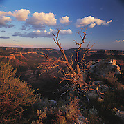 Crazy Jug Canyon, Tapeats Amphitheater & Juniper tree, Crazy Jug Pt., Grand Canyon National Park, Arizona..Media Usage:.Subject photograph(s) are copyrighted Edward McCain. All rights are reserved except those specifically granted by McCain Photography in writing...McCain Photography.211 S 4th Avenue.Tucson, AZ 85701-2103.(520) 623-1998.mobile: (520) 990-0999.fax: (520) 623-1190.http://www.mccainphoto.com.edward@mccainphoto.com