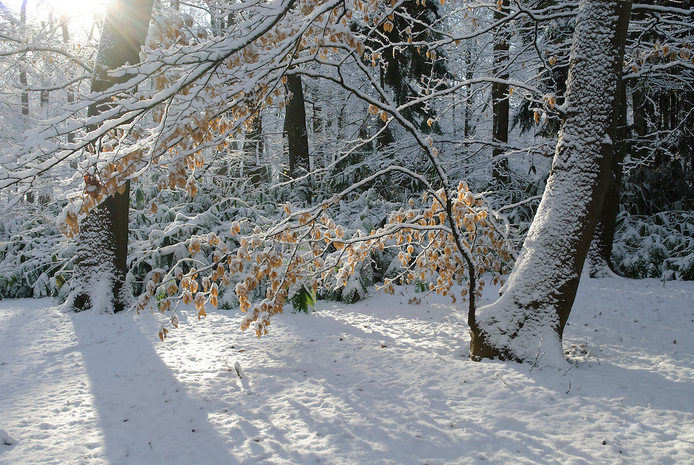 Gooilust Winter, koud, cold snow, sneeuw, winter, cold, wit, white