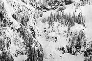 Trees cling to the icy and snowy side of Edge Peak on the Mount Blanshard Massif.  Photographed from Golden Ears Provincial Park in Maple Ridge, British Columbia, Canada