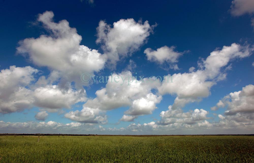 04 June 2014. Jean Lafitte National Historic Park, Louisiana.<br /> Marshland at the Barataria Preserve wetlands south or New Orleans.<br /> Charlie Varley/varleypix.com