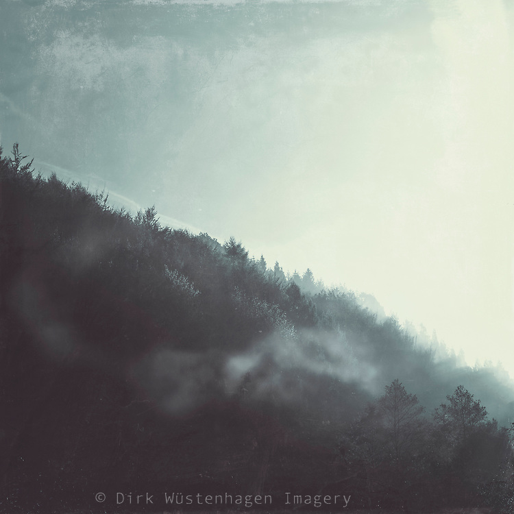 Woodlands in morning fog at sunrise - monochrome textured photograph