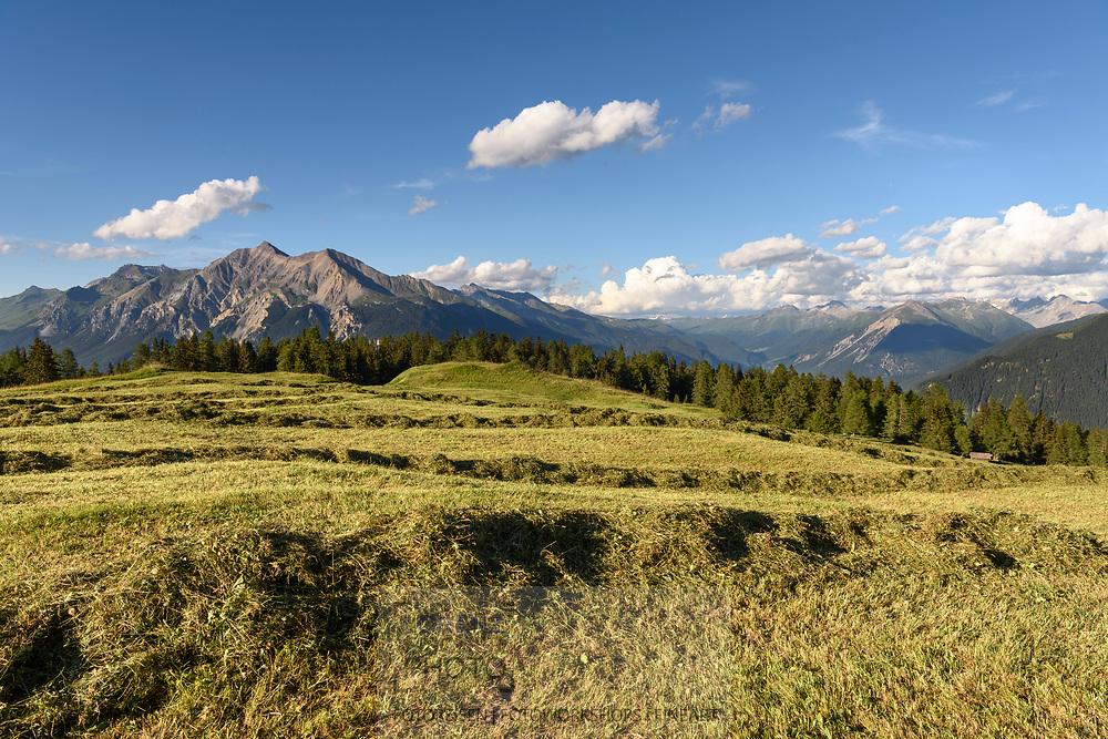 Geschnittene Heu-Wiese bei Munter mit Lenzerhorn, Salouf, Graub&uuml;nden, Schweiz<br /> <br /> Meadow at Munter, Salouf, Grisons, Switzerland
