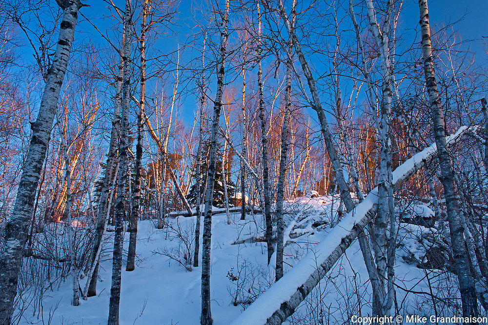 Morning light on snow and birch trees at Caddy Lake<br />