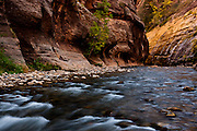 The Virgin Narrows trail is known for following the course of the Virgin River Canyon on Utah's Zion National Park