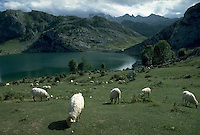 September 1991, Asturias, Spain --- Sheep graze above a picturesque mountain lake in the Picos de Europa, Asturias, Spain. --- Image by © Owen Franken/CORBIS