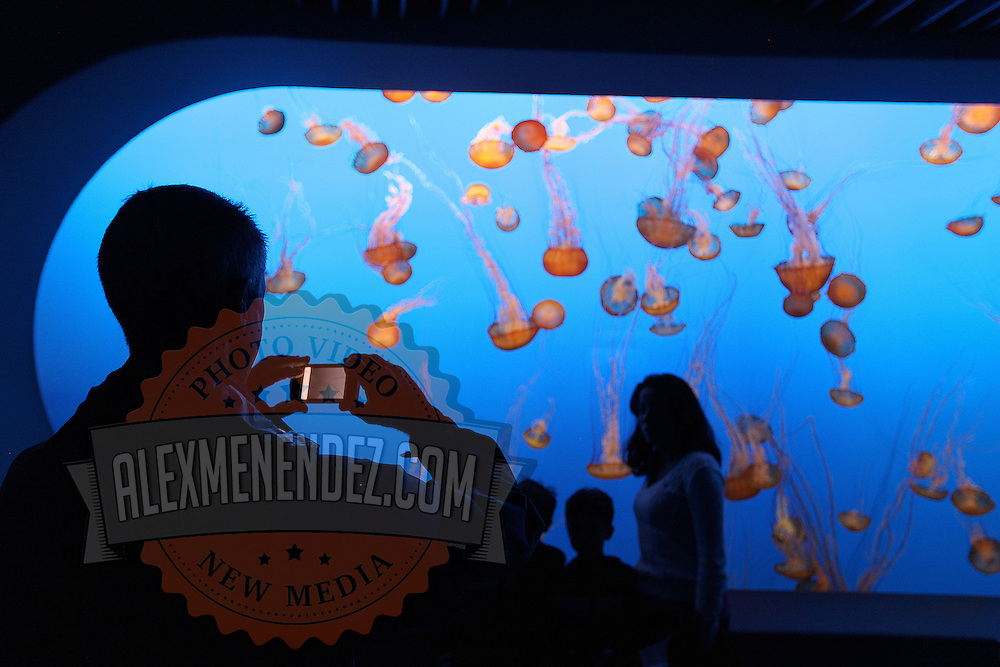 """Visitors tour """"The Jellies Experience"""" at the Monterey Bay Aquarium, which is located on Cannery Row in Monterey, California, on Friday July 13, 2012.(AP Photo/Alex Menendez)"""