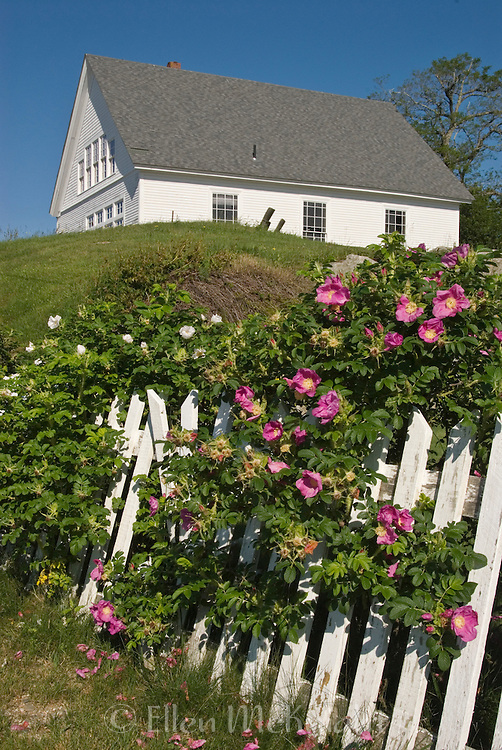 Old Meeting House in Stonington Maine with Picket Fence and Roses in Foreground