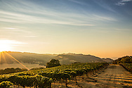sunset on a Sonoma Valley mountaintop vineyard