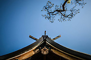 FUKUOKA, JAPAN-  Tenji - Kego Jinja - 2009 - The roof of the shrine in front of a matsu, typical japanese pine. April 2009 [FR] Le toit du temple Keko Jinja faisnat face au matsu, le pin japonais