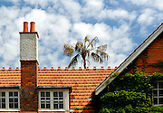 Tiled roof, chimney and palm tree. The Domain, Sydney, Australia