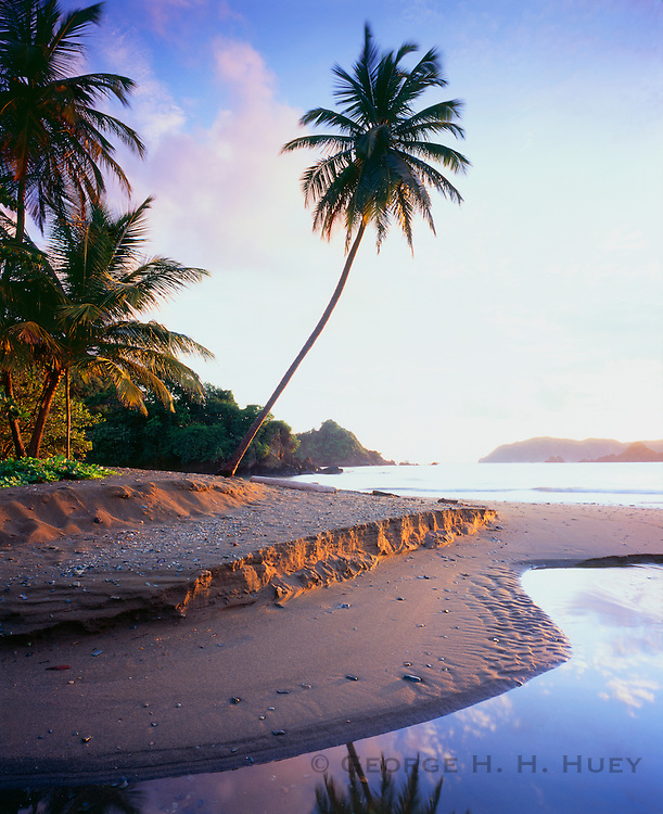 6212-1010 ~ Copyright: George H. H. Huey ~  Beach at Tyrell's Bay with palm tree.  Near village of Speyside, island of Tobago.  Trinidad and Tobago. Caribbean.