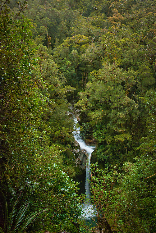 A waterfall on Roaring Burn emerges from subalpine rainforest, Milfrod Track, New Zealand