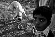 """Increasingly widespread is the tendency to hold dogs mastiff breed. A kid and his bully kutta dog. Countryside of Rawalpindi. Pakistan, on thursday, December 11 2008.....According to the Islamic tradition, angels do not enter a house which contains dogs. Even if they are considered """"ritually unclean"""" by the jurists, the fighting dogs of Pakistan are tolerated by institutions and by believers alike. These mastiffs are grown and trained explicitly for these matches. Spectators in this area flock-in from nearby villages whenever a famous dog is scheduled to enter the arena. And this is more than just a show: entire families base their social esteem on the results of such bloody confrontations."""