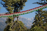 "Palampur. India: Prayer flags are strung across the road on a walk from the Country Cotttages, in the Chandpur Tea Estate, to the ""5 house"" village and Himalayas beyond (Photo: Ann Summa)."