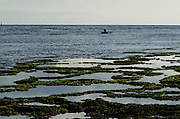 Fishing at low tide<br /> Biak Island<br /> West Papua<br /> Indonesia