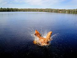 Oscar likes to swim.