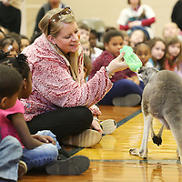 Lauren Wood | Buy at photos.djournal.com<br /> Kindergarten teacher Kelly Hutcheson feeds a 14-month old red kangaroo named Dominic as Bob Tarter with the Natural History Educational Company of the Midsouth talks to students about animals of the desert Thursday morning at Carver Elementary School.