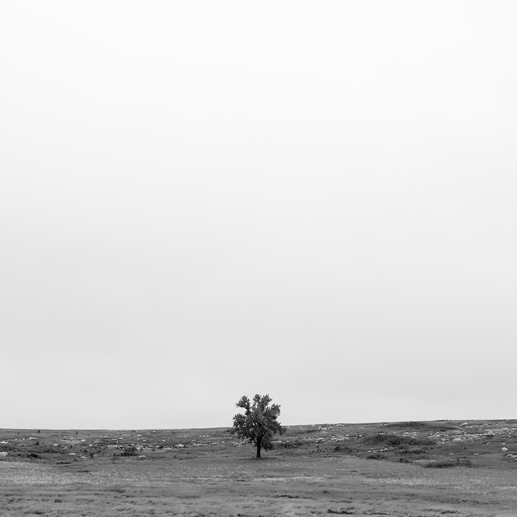 https://Duncan.co/tree-in-a-field-2
