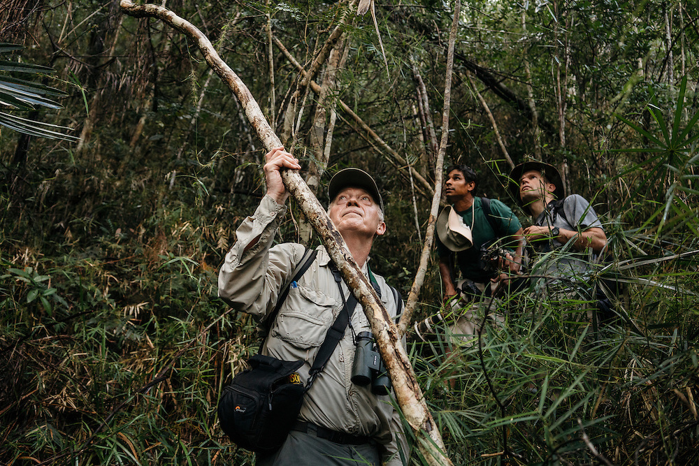 Ornithologists Martjan Lammertink and Tim Gallagher, search for birds on a hike on the northern edge of Humbolt National Park in Eastern Cuba, with guide El Indio, on Jan. 27, 2016.