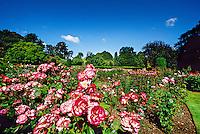 Rose Garden, Botanic Gardens, Christchurch, New Zealand