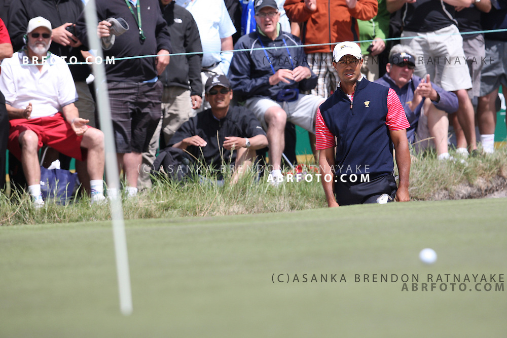 20 November 2011 : Tiger Woods looks at his ball as his bunker shot gets closer to the hole during the fifth-round Sunday Final round single ball matches at the Presidents Cup at the Royal Melbourne Golf Club in Melbourne, Australia. .