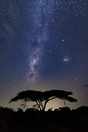 Milky Way and the Large Magellanic Cloud in the Southern Hemisphere above an umbrella thorn tree, © 2019 David A. Ponton