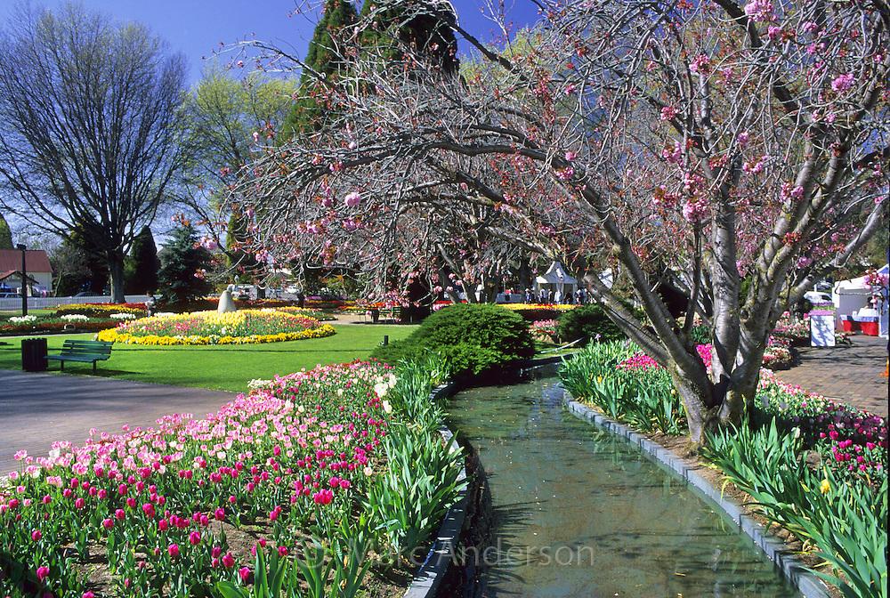 Beautiful garden with tulips, Corbett Gardens, Bowral, Australia.