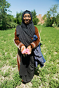Portrait of Sofia, a rose farmer from KELAAT M'GOUNA, MOROCCO - 14TH MAY 2016 - Portrait of a rose farmer from Kelaat M'Gouna, Dades Valley - also known as the 'valley of roses' - Southern Morocco.