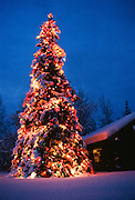 Alaska. Fairbanks. Christmas tree.