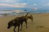 Dogs on the beach, fishermen in the background Sanur. Bali revisited January 2012.