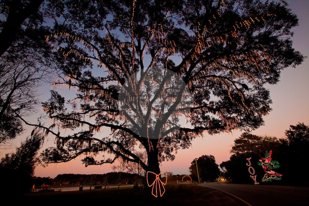 Fairy lights decorate a live oak tree mixed in with spanish moss on the traditional lowcountry tree in James Island County Park Charleston, SC. The park features a holiday light show for christmas. (photo by Charleston SC photographer Richard Ellis)