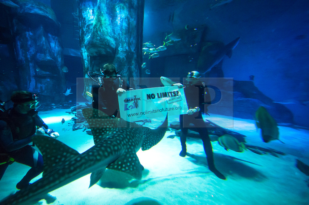 (c) Licensed to London News Pictures.10/07/2014 London, UK. Shark Trust Patron and wildlife presenter Steve Backshall dives at the Sea Life London Aquarium. Steve is highlighting the campaign to stop uncontrolled shark fishing in European waters. Photo credit Simon Ford/LNP