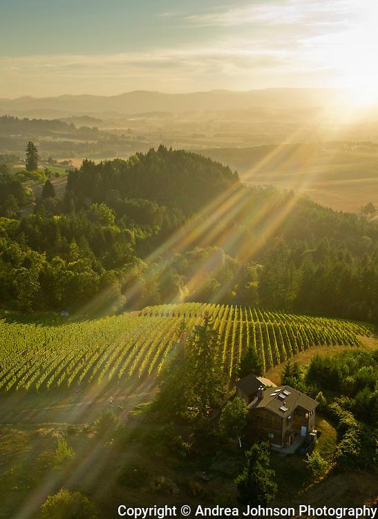 Roots estate vineyard, Yamhill, Willamette Valley, Oregon