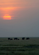 Sunset and elephants in Amboseli National Park, Kenya.