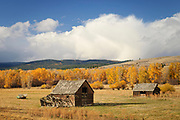 Old ranch buildings and cottonwood trees in autumn color; North Powder River Road, the Elkhorn Scenic Byway, in Baker County, eastern Oregon.