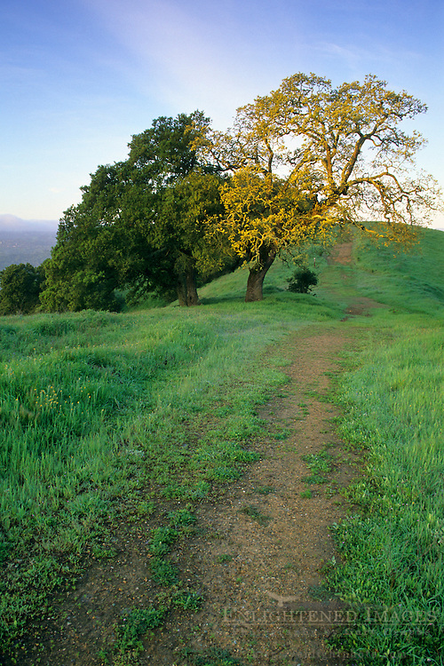 Green hills and hiking trail in spring on Lafayette Ridge, Lafayette, CALIFORNIA