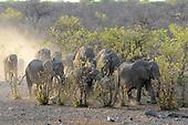 Namibia / Namibië