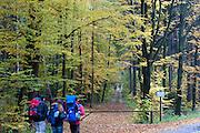 Wanderer, Wald, Nationalpark sächsische Schweiz, Sächsische Schweiz, Elbsandsteingebirge, Sachsen, Deutschland | walkers, forest, national park, Saechsische Schweiz, Saxon Switzerland, Saxony, Germany