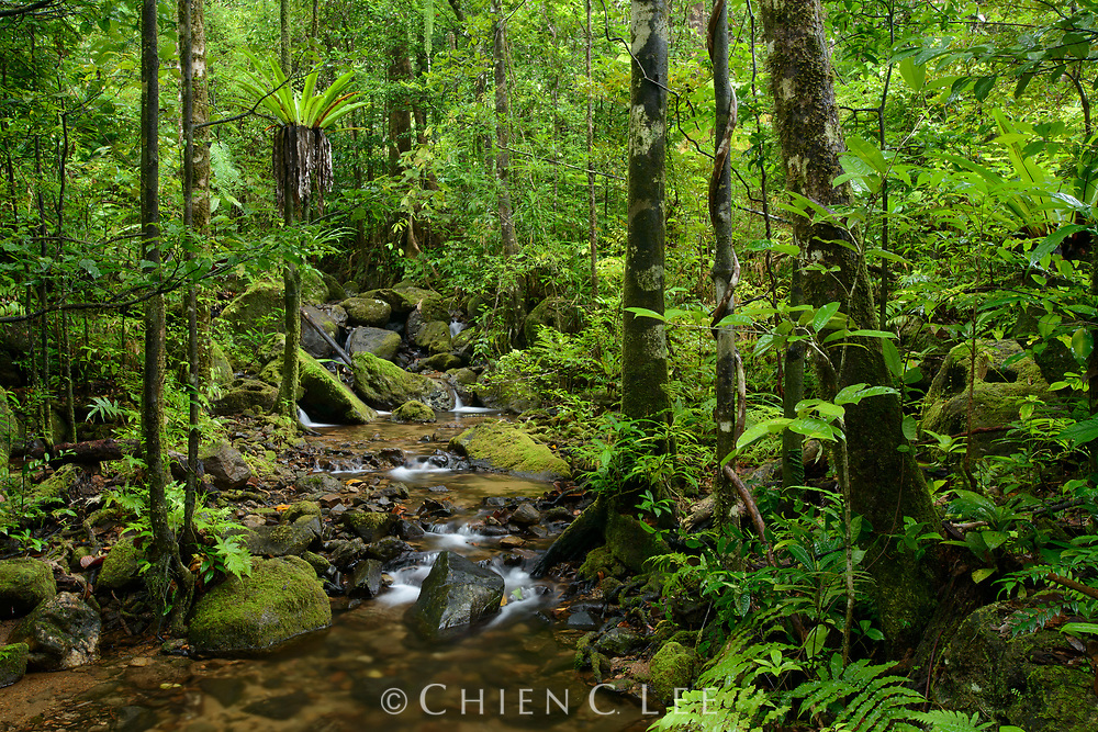 Stream amidst lowland rainforest in Masoala National Park. Antsiranana, Madagascar.