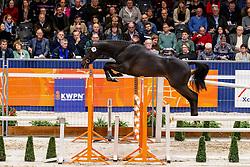 078, Liamant W<br /> KWPN Hengstenkeuring - 's Hertogenbosch 2019<br /> © Hippo Foto - Dirk Caremans<br /> 30/01/2019