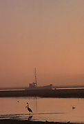 Sunrise, Sunset, Heron, Great Blue Heron, California, Morro Bay