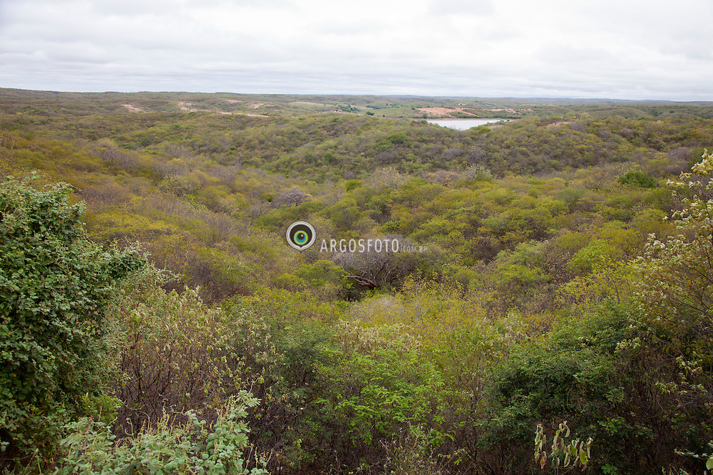 Caatinga eh o unico bioma exclusivamente brasileiro, o que significa que grande parte do seu patrimonio biologico nao pode ser encontrado em nenhum outro lugar do planeta. Eh o mais fragilizado dos biomas brasileiro, pois uso insustentavel de seus solos e recursos naturais ao longo de centenas de anos de ocupacao, fazem com que a caatinga esteja bastante degradada. / Caatinga is a type of vegetation, and an ecoregion characterized by this vegetation in the northeastern part of Brazil. It is the most fragile biomes in Brazil because of their unsustainable use of land and natural resources over hundreds of years of occupation, make the savanna is highly degraded.