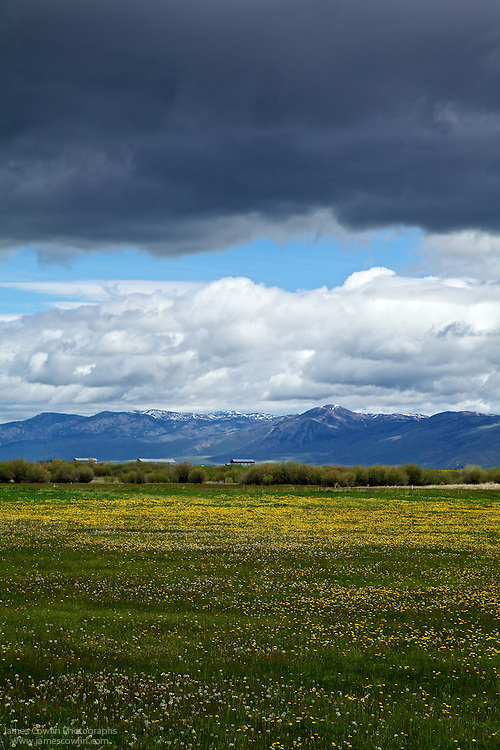 Fields of flowers under a cloudy sky along Us Route 89 north of Bear Lake in Idaho