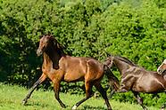 Horses Fine Art Gallery 2018