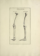 woodcut print of Human Anatomy skeleton legs from Anatomia per uso et intelligenza del disegno printed in Rome in 1691
