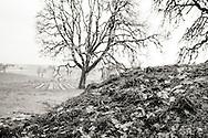 Kompost på Johan Vineyards, Willamette Valley, Oregon, USA