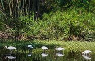 Wood Stork & Ibis, Garden of Earthly Delights, Sarasota, Florida