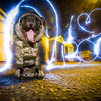 Highlights of images of dogs in the outdoors, by specialist dog photographer Rhian White.