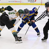 5th year forward Bailey Braden (8) of the Regina Cougars in action during the Women's Hockey home game on February 10 at Co-operators arena. Credit: Arthur Ward/Arthur Images